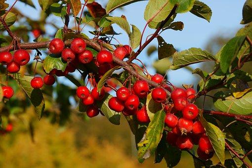 bush-berries